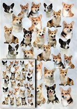 Corgi Dog Gift Wrapping Paper By Starprint