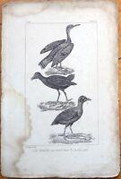 Coot/Le Caurale, La Poule Deau, La Foulque - 1830s French Bird Print