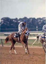 Set Of 3 Secretariat Horse Racing Triple Crown Winner  Photos 8x10