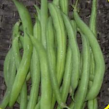 160 Tendergreen Improved Green Bush Bean Seeds - Everwilde Farms Mylar Packet