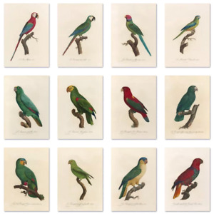 Vintage birds parrot macaw amazon lory wall art poster prints A4 A5 A6 aged look