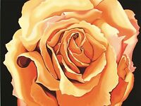 ART PRINT POSTER DRAWING FLOWER ROSE ORANGE PETAL FLORAL NATURE NOFL0613