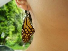 ONG REAL Blue Glassy Tiger Butterfly Wings Earring 925 Hook Jewelry pick color!