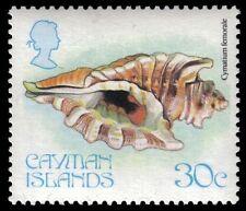 """CAYMAN ISLANDS 446 (SG509) - """"Cymatium femorale"""" Shell (pf1018)"""