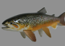 Realistic Brown Trout Replica