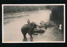 Ceylon Kandy Animals Elephants washing in river 1933 photopraph