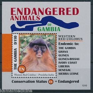 Red Colobus, Species of Old World Monkey, Endangered, Gambia 2013 MNH SS