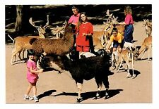 Llama Deer Goats Postcard Catskill Game Farm New York Lower Feeding Ground