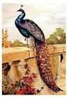 Colorful Peacock On Ledge Quilt Block Multi Sizes Free Shipping World Wide