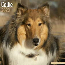 Collie Calendar 2020 Premium Dog Breed Calendars