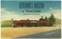 Bergman's Museum Of Natural History Aguanga California 1950's Car Postcard