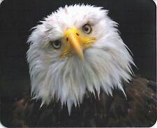 Mauspad Edition Colibri: Weißkopfseeadler- schönes Porträt
