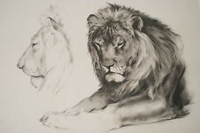 LITHOGRAPHIE MILLOT LION ETUDE SIGNEE