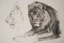 LITHOGRAPHIE MILLOT LION ETUDE SIGNEE