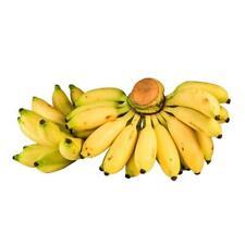 100 pcs Rare Dwarf  00004000 banana tree Seeds Mini Bonsai Exotic Plants Home Garden V6K7