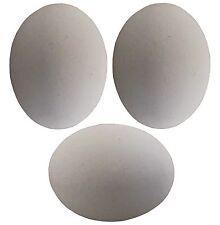 3 PACK WHITE CERAMIC DUMMY BIRD QUAIL NEST EGG HATCHING CRAFT NESTING TRAIN DOVE