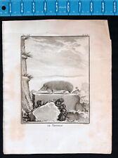 1792 Tendrac or Tenrec Hedgehog Buffon Fritzsch de Seve Copper Plate Engraving