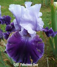 New listing Tall Bearded Iris: Fabulous One (Richard Nicodemus, 2006) Pre-Sale - Awards