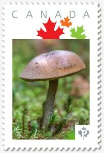 MUSHROOM = BROWN = Picture Postage stamp MNH Canada 2018 [p18-07s22]
