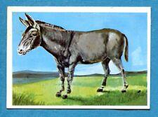 Figurina Panini-ANIMALI DI TUTTO IL MONDO 1965-n.156 - ASINO -rec