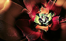 Framed Print - Pink Red & Green Flower (Picture Poster Flowers Roses Art)