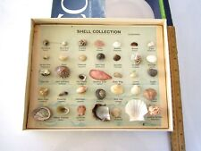 """35 SAMPLES SHELL COLLECTION & BOX  SIZE:11"""" W x 8.5"""" H x 1.25"""" T; RARE,VINTAGE"""