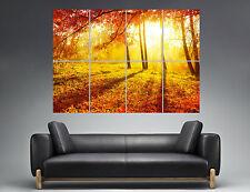 Automne  Nature Couché Soleil Forêt  Paysage Wall Art Poster A0 Large print 02