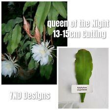 1 Rare cactus EPIPHYLLUM GERMAN Oxypetalum LARGE white FLOWERS fresh cutting