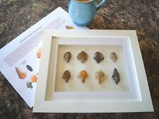 Paleolithic Arrowheads in 3D Picture Frame, Authentic Artifacts 70,000BC (Y003)