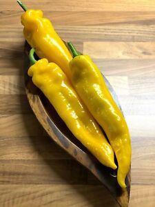 15 Corno di Toro Paprika Samen süße riesige  Spitzpaprika Sorte