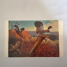 Autumn Splendor by Lynn Bogue Hunt Pheasants Unposted Postcard
