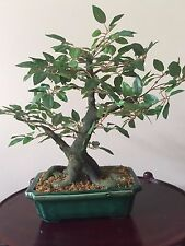 "16"" - Bonsai Decorative Silk Plant In Ceramic Pot"