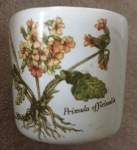 Vintage Bideford North Devon Pottery Botanical Floral Primula Officinalis 4cm