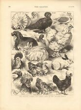 1873 ANTIQUE PRINT- POULTRY, PIGEON AND RABBIT SHOW AT CRYSTAL PALACE