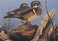 "Tim Schultz Backwater Splendor/"" Wood Duck Print SN 24/"" x 12/"""