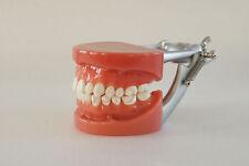 FDA Dental Standard Teeth Model 32Pcs Teeth Teach Study DP Articulator A6