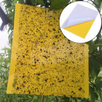 Yellow sticky insect killer whitefly thrip fruit fly gnat leafminer trap  crP0TR