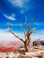 111905 DEAD TREE GRAND CANYON Decor LAMINATED POSTER FR