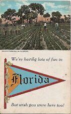Old pc,Florida Truck farming,,crops,Black Americans
