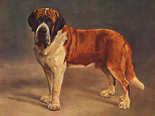 SAINT BERNARD LOVELY IMAGE OF A STANDING DOG ON GREETINGS NOTE CARD