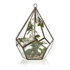 Glass & Brass Terrarium Large Pentagon Bowl Vase Hydroponic Plant Indoor Garden