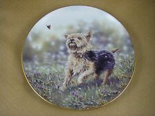 Danbury Mint - Yorkshire Terriers - The Thrill of the Chase Plate - Yorkie