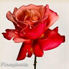 1980 Vintage FLOWER Botanical Fine Art ROSE Photo Litho Plate IRVING PENN 16x20
