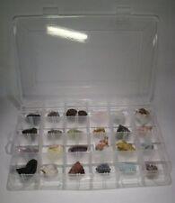 conchiglie e altro Vetrinetta in alu formato Compact per minerali fossili