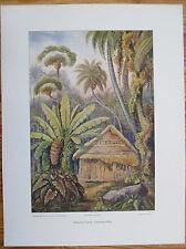 HAECKEL: Large Chromolithographic Print Kaduwella Ceylon Sri Lanka - 1905
