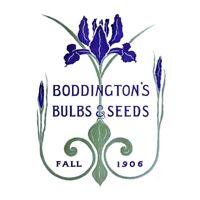 Vintage Advert Boddingtons Seeds Bulbs Fall 1906 Unframed Wall Art Print Poster