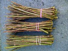 "Willow cuttings super fast growing biomass Salix smithiana 10 * 12"""