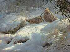 Becada - Lámina sobre lienzo. Chocha Perdiz (Scolopax rusticola) Cuadro de aves