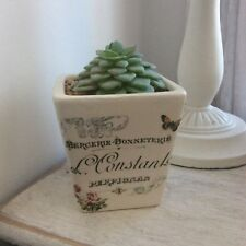 Shabby Chic French Script Small Pot with Realistic Succulent Plant