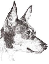 Toy Fox Terrier Print